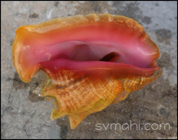 carlaconch